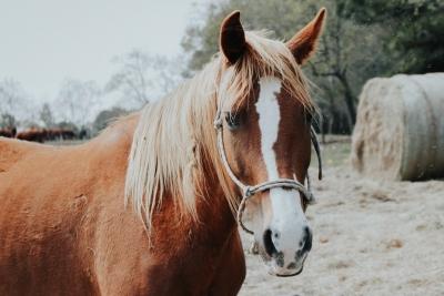 GoAustraliaPlus | Pferde AuPair